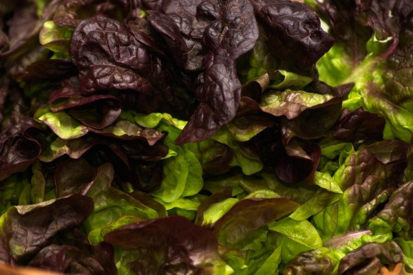 5 Reasons Why You Should Include More Leafy Greens In Your Diet
